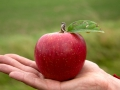 Apfel_in_Hand_CR_Uve_Haussig
